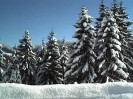 Winterfotos_6